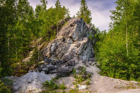Russian forest close view of the trees Stock Photo