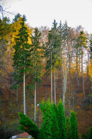 Beautilful view of the beautiful nature of the Carpathian mountains in autumn