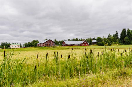 Finland nature in Scandinavia, and red small houses on the grass