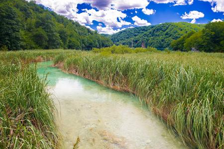 Blue river among high green grass in Croatia