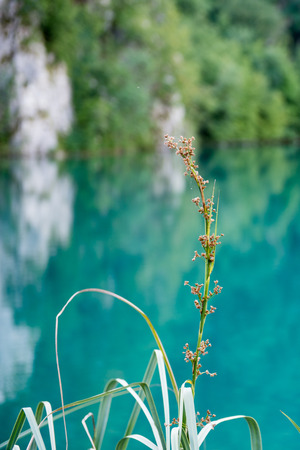 Beautiful nature of the Plitvice lakes area in Croatia Banco de Imagens