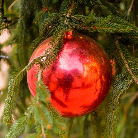 Crystall ball on the Christmas tree