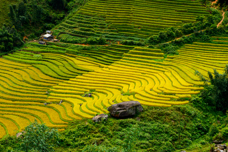 Rice terraces in Northern Vietnam Stock Photo