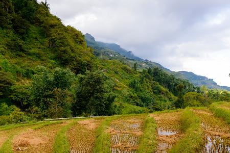 Rice terrace on a mountain hill in Vietnam Foto de archivo