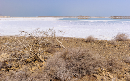 Plants with salt at the coast of the Dead Sea Imagens