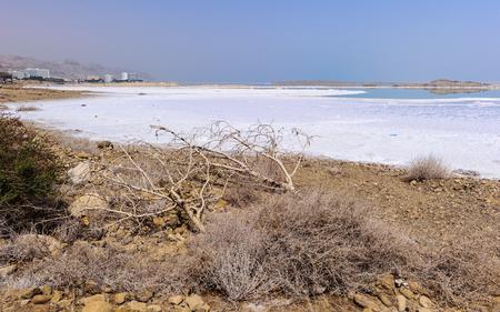 Dead sea coast in Israel Imagens - 91884189