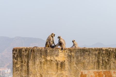 Monkeys sitting on a brick wall during the day