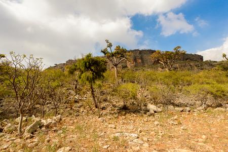 Nature of Socotra Island, Yemen. Stock Photo