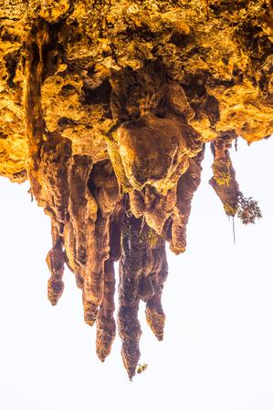 Cave Degub, Sokotra Island, Yemen
