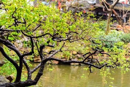 Yu Or Yuyuan Garden (Garden Of Happiness), An Extensive Chinese ...