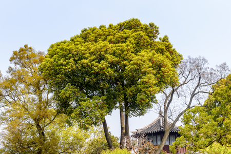Nature of The Humble Administrator's Garden, a Chinese garden in Suzhou Standard-Bild