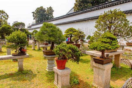 Nature of The Humble Administrators Garden, a Chinese garden in Suzhou