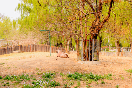 a zoological park in Beijing, China.