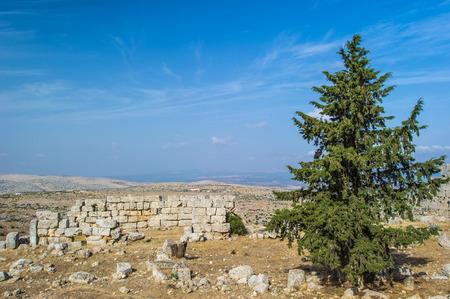 Fir tree in Syria