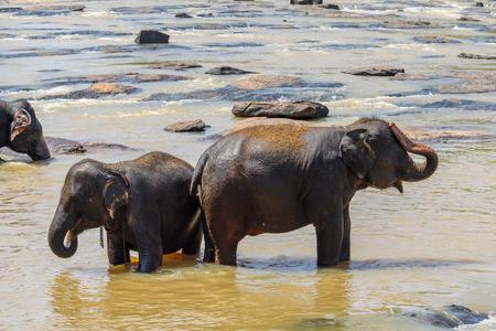 Elephants background.
