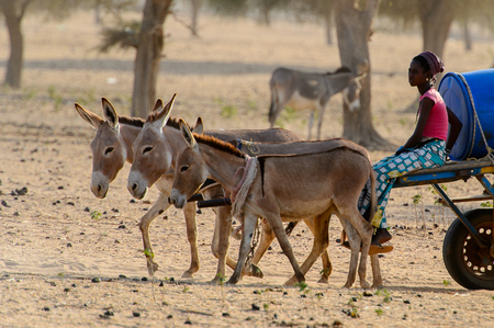 FERLO DESERT, SENEGAL - APR 25, 2017: Unidentified Fulani girl sits in the cart in the village . Fulanis (Peul) are the largest tribe in West African savannahs