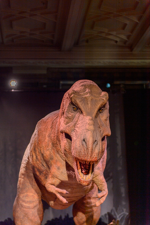 LONDON, ENGLAND - JUL 23, 2016: Animated T-Rex at the Natural History Museum (1881), Exhibition Road, South Kensington