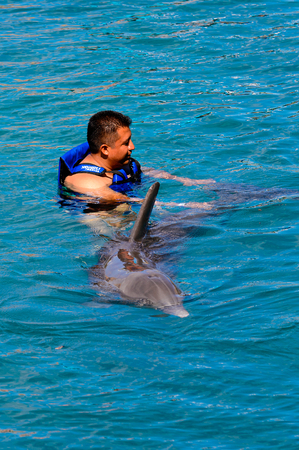 XCARET, MEXICO - NOV 7, 2016: Dolphins attraction of the Xcaret,  Maya civilization archaeological site, Yucatan Peninsula, Quintana Roo, Mexico