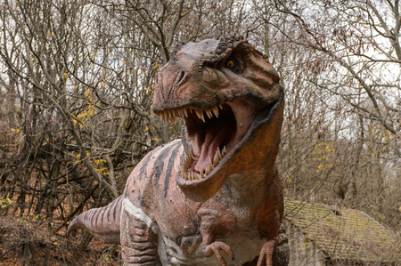 BRATISLAVA, SLOVAKIA - OCT 18, 2015: Tyrannosaurus Rex head in DinoPark in Bratislava, Slovakia. Tyrannosaurus is a genus of coelurosaurian theropod dinosaur