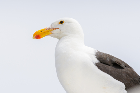 Albatross of the Walvis Bay, Namibia