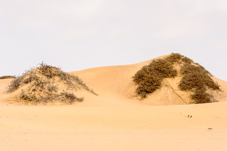 Beautiful landscape of the Namib-Naukluft National Park, Namibia