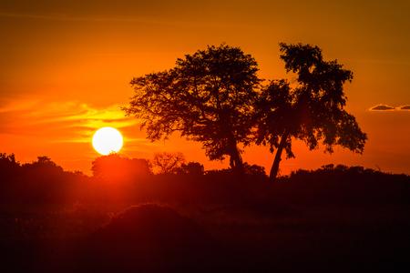 Beautiful sunset over the Okavango Delta (Okavango Grassland), One of the  Seven Natural Wonders of Africa, Botswana Stock Photo