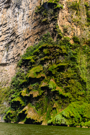 Rock formations similar to  a fair tree, Sumidero Canyon National Park, Chipas, Mexico. Stok Fotoğraf