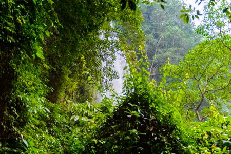 Cascada de Misol-Ha, a waterfall in the Municipality of Salto de Agua, Chiapas, Mexico Stock Photo
