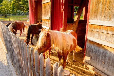 Horses at the farm in Park on the Lake Constance (Bodensee) on the Rhine at the  foot of the Alps