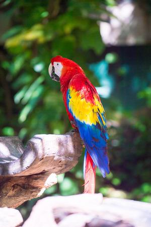 Macau parrot Stock Photo