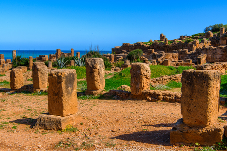 Nature and ruins of Tipasa, a colonia in Roman province Mauretania Caesariensis, nowadays Algeria. Imagens - 110121830