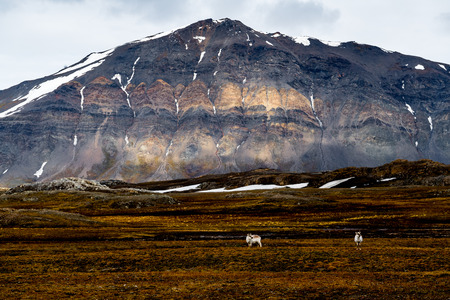 Snow mountains and Nature of the Svalbard archipelago 免版税图像