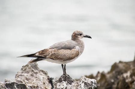 Seagull in Mexico