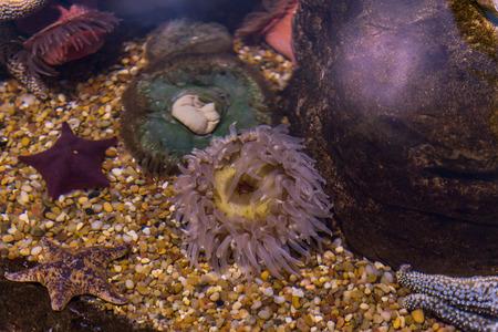 Sealife in the aquarium Imagens