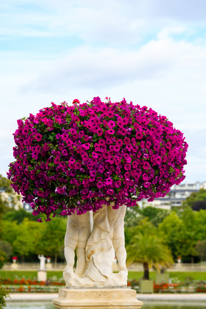 Flowers in the Luxembourg Garden Stock Photo