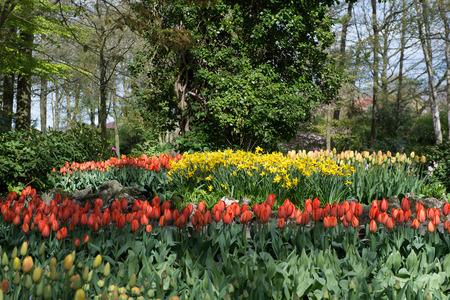 Red tulips in the Keukenhof park in Netherlands Stock Photo