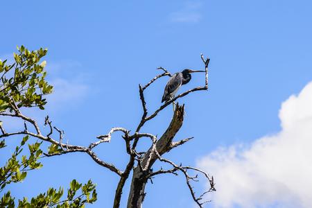 Birds and Nature of the Isla Margarita, Venezuela Stock Photo