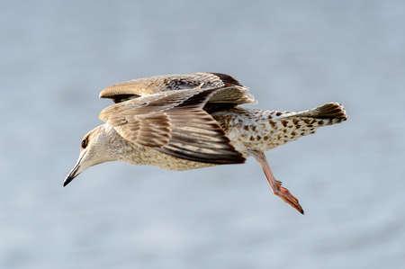 Little bird flyes in the sky Banco de Imagens