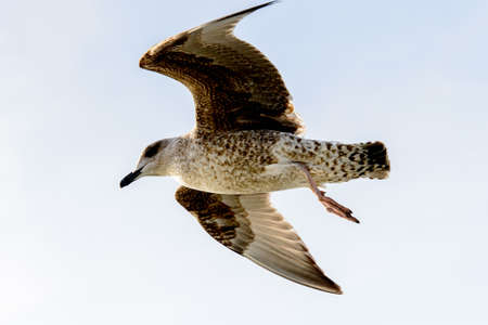 Sea gull flyes in the sky