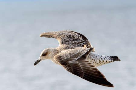 Little bird flyes in the sky Standard-Bild