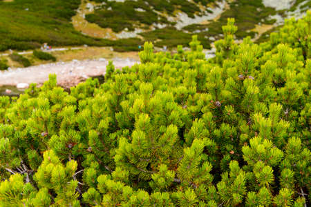 Nature of the High Tatra Mountains (Vysoke Tatry) a mountain range along the border of Slovakia and Poland Standard-Bild