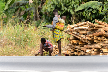 KUMASI, GHANA - Jan 16, 2017: Unidentified Ghanaian people collect tree branches. People of Ghana suffer of poverty due to the bad economy