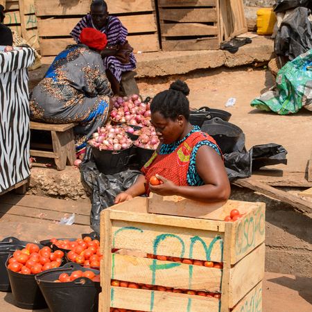 CENTRAL REGION, GHANA - Jan 17, 2017: Unidentified Ghanaian woman sorts tomatoes in local village. People of Ghana suffer of poverty due to the bad economy