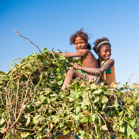 ANTANANARIVO, MADAGASCAR - JULY 3, 2011: Unidentified Madagascar girls play over the banch of leaves. People in Madagascar suffer of poverty due to slow development of the country Editorial