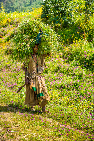 OMO, ETHIOPIA - SEPTEMBER 19, 2011: Unidentified Ethiopian woman carries grass on her head. People in Ethiopia suffer of poverty due to the unstable situation