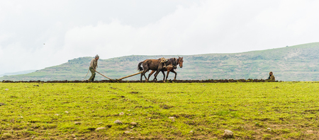 OMO, ETHIOPIA - SEPTEMBER 21, 2011: Unidentified Ethiopian man and horses in the field. People in Ethiopia suffer of poverty due to the unstable situation Editorial