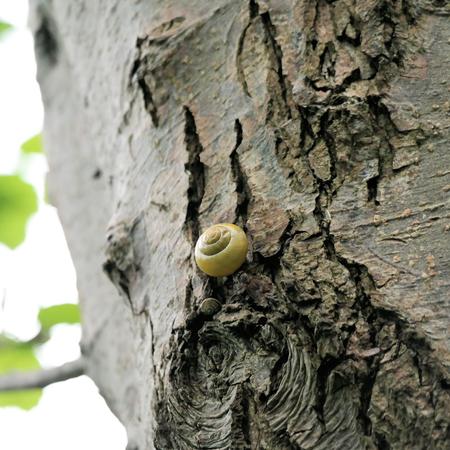 gastropoda: snail on tree trunk