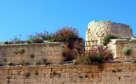 Flowers Grow on Saint Nicholas Castle, Marseille, France Stock Photo - 14939029