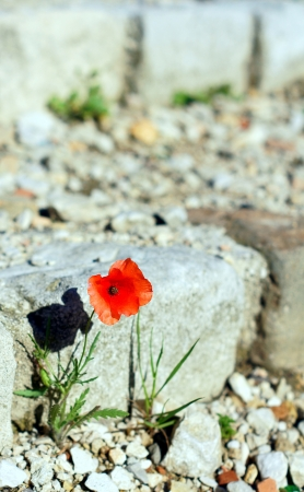 neoclassical: A Flower Among the Ruins of Saint Nicholas Castle, Marseille, France