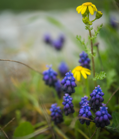 Image of Spring flowers at Akrokorinf, Peloponnese, Greece photo